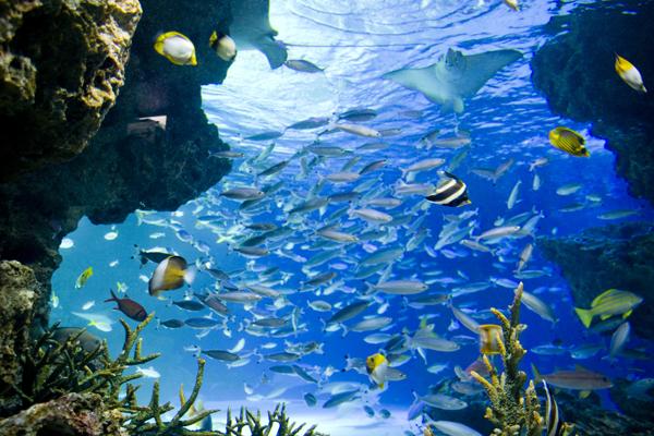 1sunshine aqualium 1